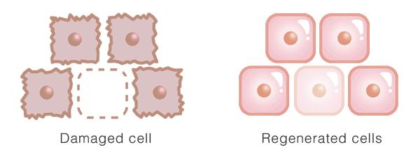 PDRN skin rejuveneration