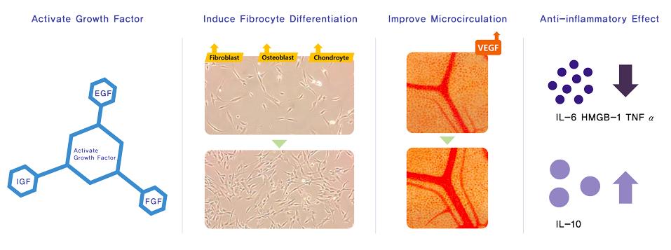 PDRN Regeneration Treatment